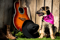 Country Pups